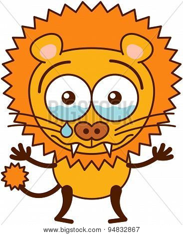 Cute lion crying disconsolately and looking for reassurance