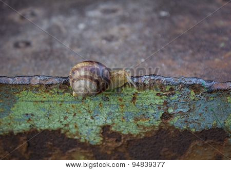 Lone snail crawling on rusty metal surface poster