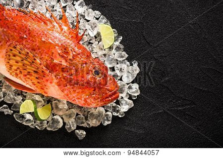 Fresh Scorpion Fish On Ice On A Black Stone Table Top View
