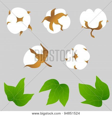 Set Of Cotton Plant Elements