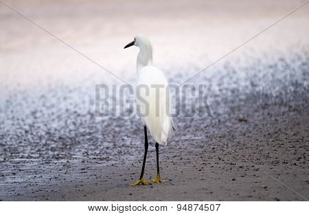 Little Egret Bird Checking Out the View