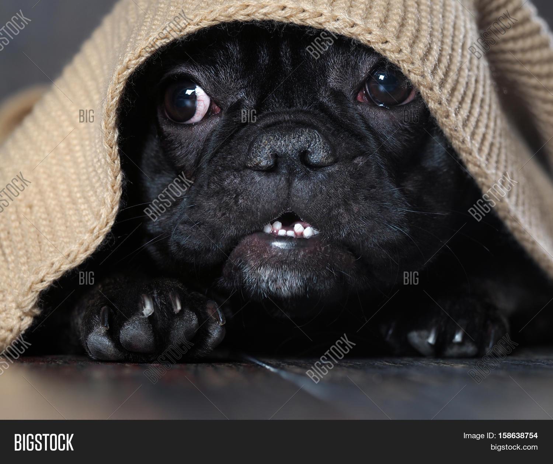 Amazing Dog Face Round Eyes Peeking Image & Photo