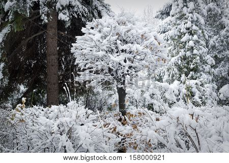 Beautiful winter park with trees covered by deep snow