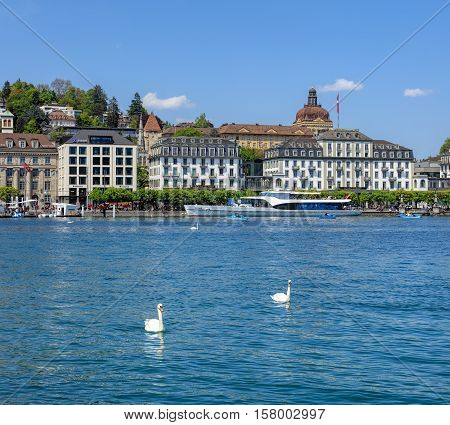 Lucerne, Switzerland - 7 May, 2016: swans and boats on Lake Lucerne, buildings on the Schweizerhofquai quay in the background, view from the Bahnhofquai quay. Lake Lucerne is a lake in central Switzerland, the fourth largest in the country.
