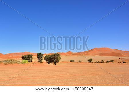 Beautiful landscape with dunes and trees at sunrise Sossusvlei Namib Naukluft National Park Namibia