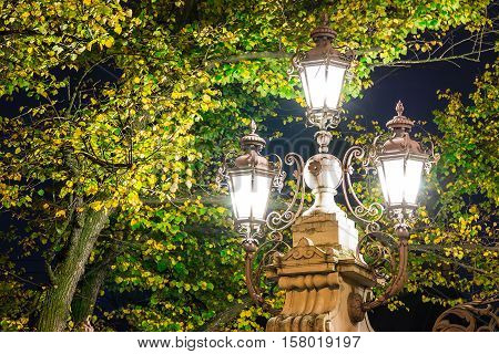 Glowing streetlight surrounded by foliage of the tree in the night