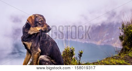 Dog looking at Quilotoa lake, a beautiful volcanic crater lake in the Andes in Ecuador covered in clouds