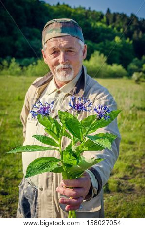 Cornflower bouquet in the hand of smiling senior man. Looking at the camera. Elderly man holding wildflowers in the meadow. Focus on the cornflower bouquet.