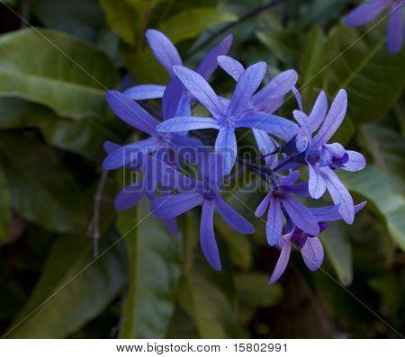 Purple Petra