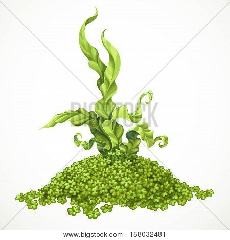 Marine Green Algae On Hill Of Actinium Sea Life Object Isolated On White Background