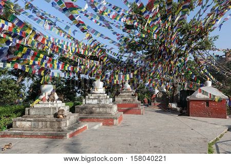 White Buddhist Stupas Under Lots Of Buddhist Prayer Flags Flattering In The Wind And Monkeys Hanging