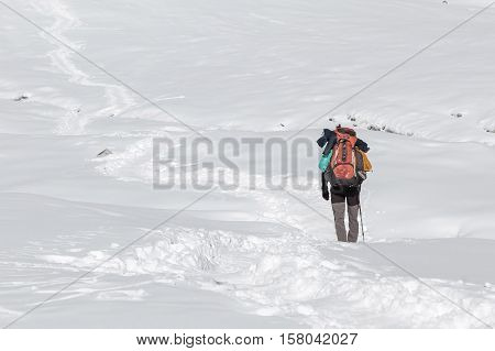 Extreme Solo Trekking Concept. Single Traveller Walking In Deep Snow With Big Heavy Backpack And Tre