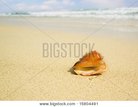 Seashell with blurred background poster