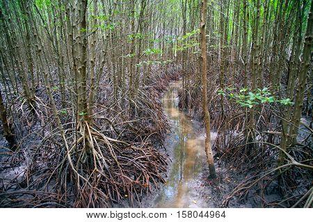 Mangrove forest near the sea in Thailand.