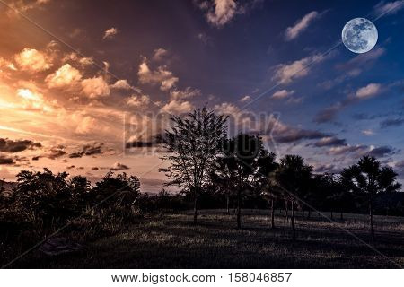 Trees against sky with clouds and beautiful full moon over tranquil nature on dark tone. Beautiful landscape under sunset moonrise is shining at national park in low light. poster