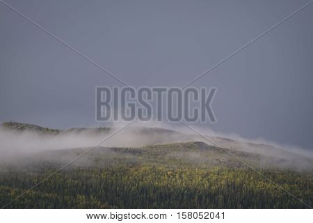 Mist evaporating from the swedish pine forest parts lit up by golden sunlight in moody landscape poster