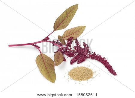 Twig with amaranth flowers and a heap of seeds on white background