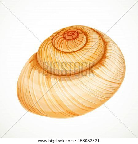 Realistic Vector Beige Round Seashell Isolated On White Background
