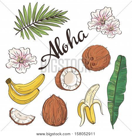 Set of aloha objects - coconut, banana, flowers and leaves. Vector illustration.