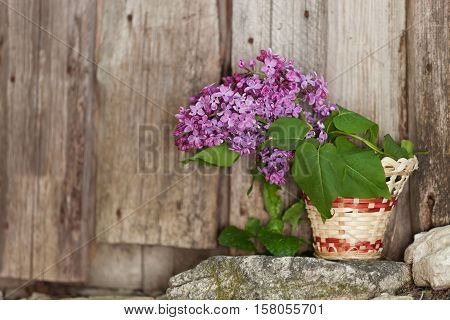 Lilac Flowers In A Wicker Basket, Standing On The Rocks