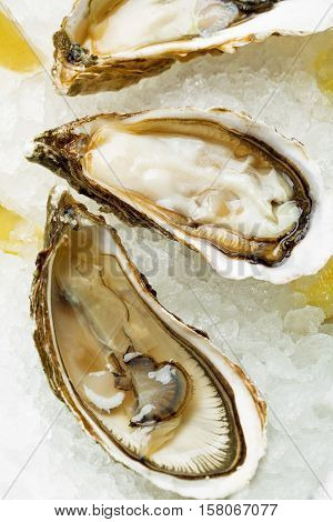 Open Wet Oysters On A Plate With Lemon And Oysters Knife With Wine