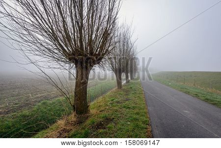 Dutch rural landscape with a long road dewy grass and a row of trees in the on a misty morning in the end of the winter season.
