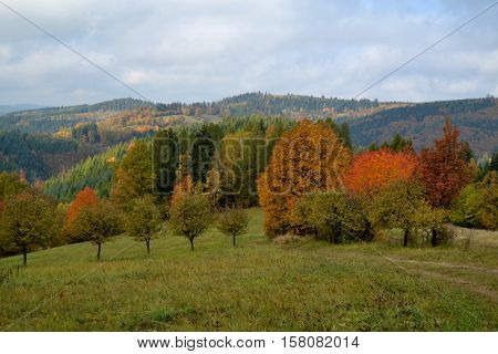 The hilly landscape is the large number of meadows and pastures that line until the reddish-colored autumn trees.