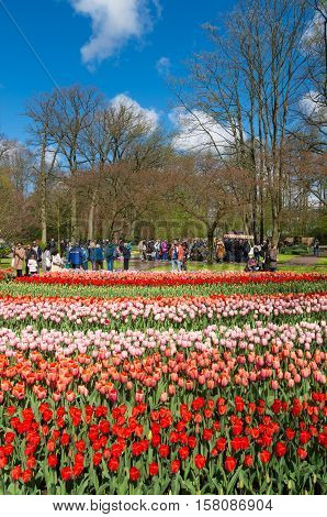 LISSE NETHERLANDS - APRIL 17 2016: Unknown tourists visiting the famous keukenhof tulip gardens in the netherlands
