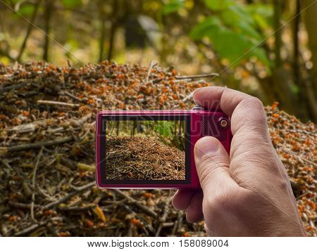 Ant hill in forest in camera viewfinder