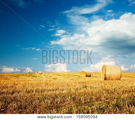 Beautiful Summer Farm Scenery with Haystacks. Cropped Field Landscape with Rolls. Blue Sky with White Clouds . Agriculture Concept. Toned Photo with Copy Space.