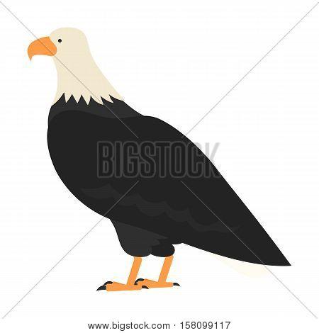 flat bird isolated on white background, beautiful vector illustration bald eagle, white headed