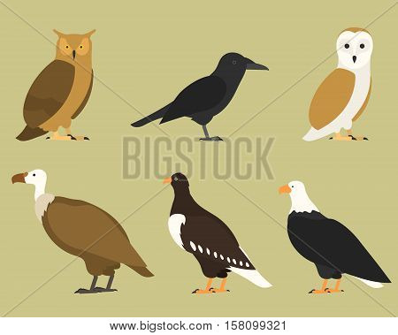 Set of flat birds, isolated on background. different tropical and domestic birds, cartoon style simple birds for logos. eagle, raven, owl, griffon,