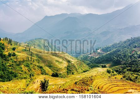 Sunlit Rice Terraces At Highlands Of Sa Pa District, Vietnam