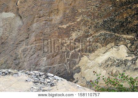 Prehistoric rock carvings petroglyph in Gobustan, Azerbaijan, depicting bulls.