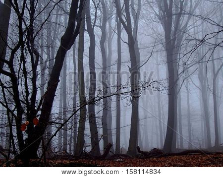 Magical autumn forest in fog and hazy atmosphere