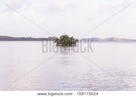 Solitude twilight beach in the evening with mangrove trees Thailand