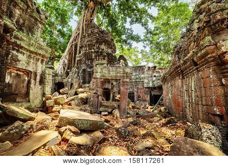 Green Trees Growing Among Ruins Of Preah Khan Temple In Angkor