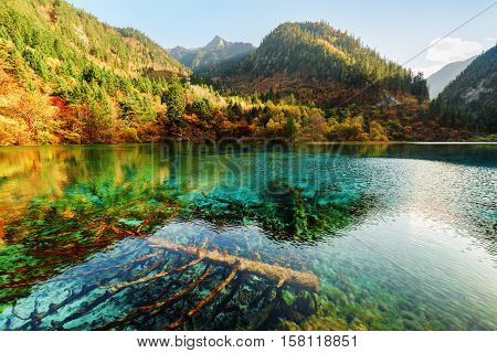 Submerged Fallen Trees In Azure Water Of The Five Flower Lake