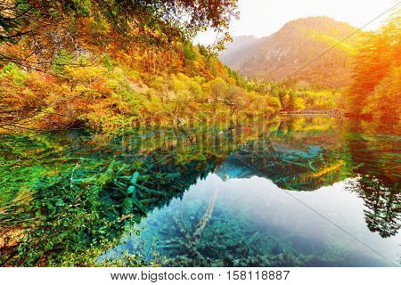 Scenic View Of The Five Flower Lake Among Amazing Fall Woods