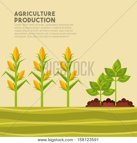 harvest of corn and plants growing. agriculture production concept. colordul design. vector illustration