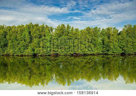 Mangrove, mangrove forest, mangrove in Asia, mangrove swamp, preserved mangrove, tree roles, lush marsh, dense swamp, wetland, poster