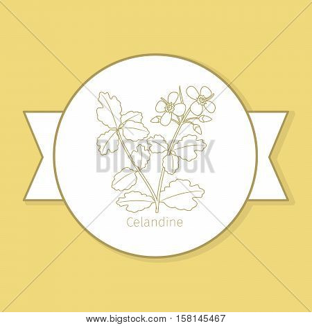 Celandine medicine plant, yellow label design in circle shape and flat shadow. Vector illustration