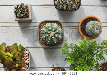 Plant Cactus Houseplant Nature