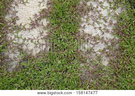 close up green grass on cement floor