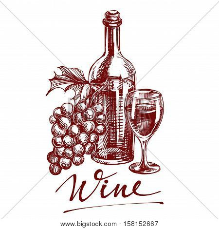 collection wine hand drawn vector llustration realistic sketch