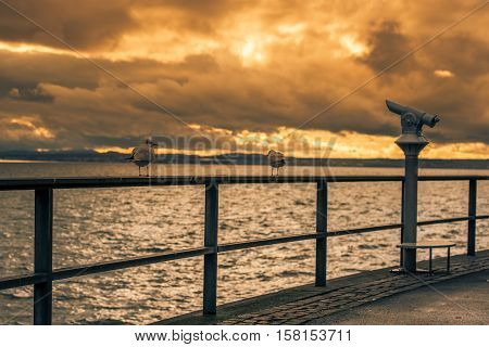 Seagulls on metal railing at sunset - View with two seagulls on a metal railing and the tourists binocular on the boardwalk from the lake Bodensee in Friedrichshafen city Germany