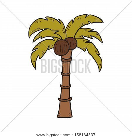 Vector cartoon illustration with hand drawn isolated coconut palm on white background. Cartoon vector exotic tree. Summer island travel icon. Vector paradise palm object. Coco tree