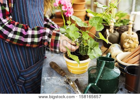 Gardening Cultivate Growth Seedling Plants Concept