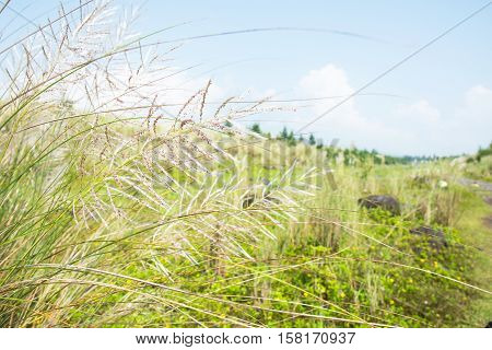 grass field along the way to Mount Mayon, Legazpi, Philippines