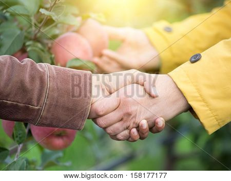 Two Men Shaking Hands In Orchard